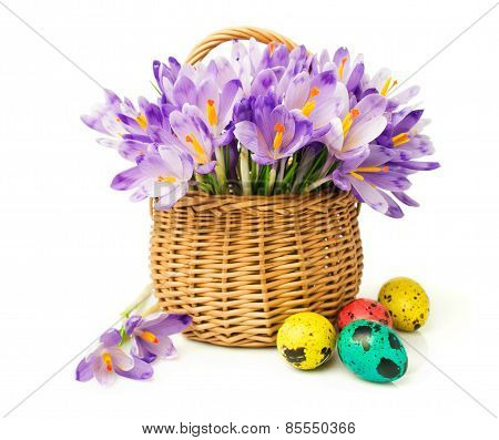 Easter. Crocuses In A Basket And Colored Eggs