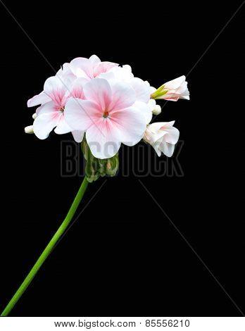 flower on black back ground