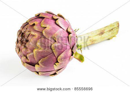 Large Purple Fresh Artichoke On  White Background .