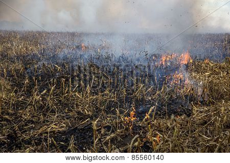 Severe Drought. Fires Agricultural Fields To Dry Completely Wind Farms. Emergency Ukraine Brings Reg