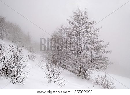 Lonely Tree In A Snow