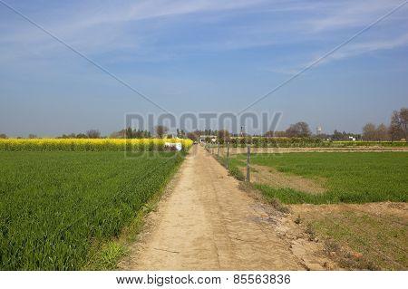 Rural Punjabi Landscape