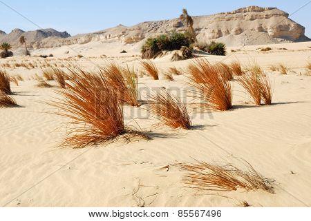 Western Desert, Sahara, Egypt
