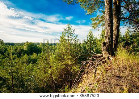 Green Summer Forest, Russian Nature