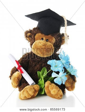 An adorable toy monkey sitting in his graduation cap and with a tied diploma and small bouquet of blue flowers in his hands.  On a white background.