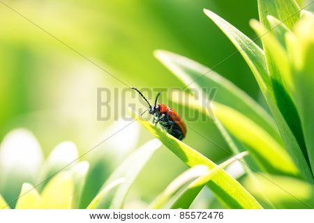 Red Insect On Young Green Leaves