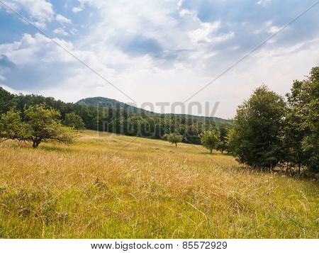 Summer Meadow Surrounded By Forest