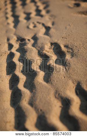 Wheel Tracks On The Sand
