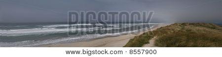 Dunes Beach Grass Panorama