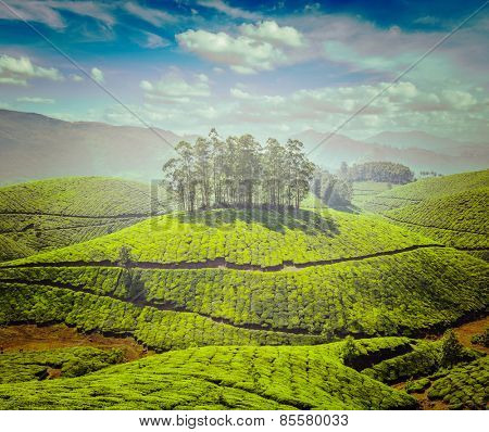 Vintage retro effect filtered hipster style image of tea plantations. Munnar, Kerala, India