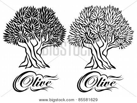 Vector Pattern With Olive Tree For Packaging