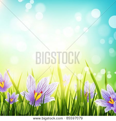 Crocus Flowers Meadow