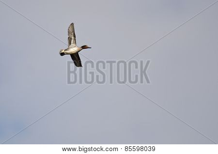Male Green-winged Teal Flying In A Cloudy Sky