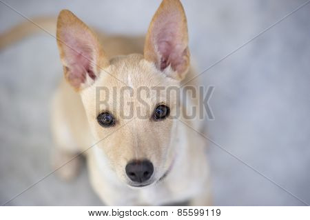 Cute Puppy Curiously Looking