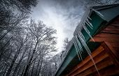 stock photo of shacks  - A walk through the deciduous maple woods and a visit to the maple syrup cabin shack - JPG