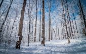 stock photo of house woods  - A walk through the deciduous maple woods and a visit to the maple syrup cabin shack - JPG