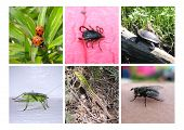 pic of testudo  - Set of insects  - JPG