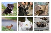 stock photo of coon dog  - set of animals  - JPG