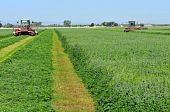 image of alfalfa  - Mowing alfalfa for hay on a Central California farm - JPG