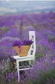 foto of lavender field  - Summer - JPG