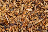 image of wood pieces  - Pine wood chips on the ground. Pieces of wood. Texture