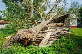 stock photo of hurricane wind  - Old Barn Damaged By Recent Hurricane - JPG