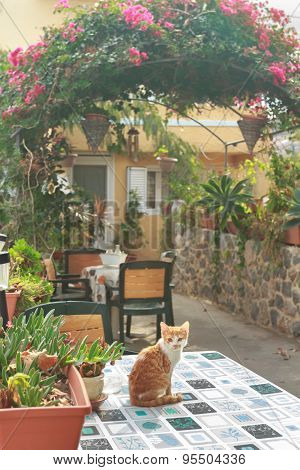 Red kitten inside Greek traditional patio with garden flowering plants