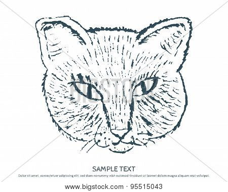 Vector sketch of a stylized kitten's face