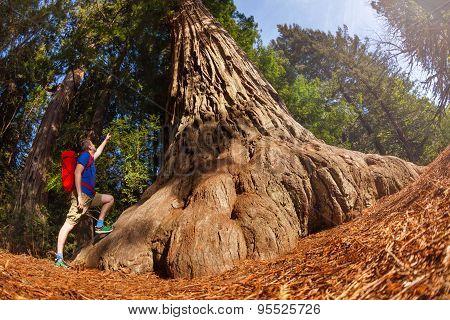 Fisheye view of man pointing at big tree, Redwood