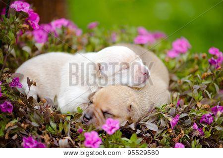 adorable tiny newborn puppies