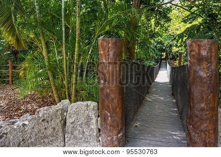Jungle Bridge