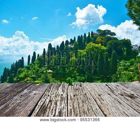 Cypress hill near Portofino village on Ligurian coast in Italy