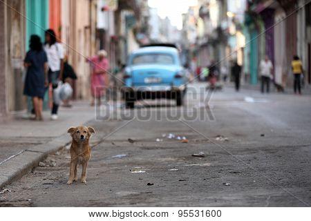 Streetlife with a dog in Havana, Cuba