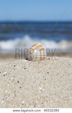 Sea Shell In Sand With Blue Sea And Sky In Background