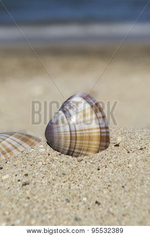 Sea Shell In Sand With Blue Sea In Background