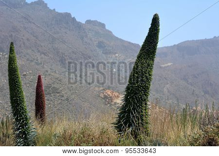 Landscape With Vegetation On National Park Tenerife. Mountain Teide. Canary Islands.Spain.