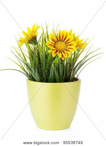 Colorful daisy flowers in flowerpot. Isolated on white background