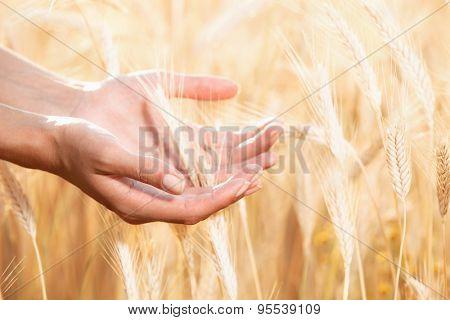 Women hands care about wheat