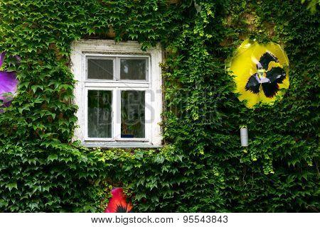 Nice old window on green wall