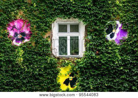 nice green wall and window