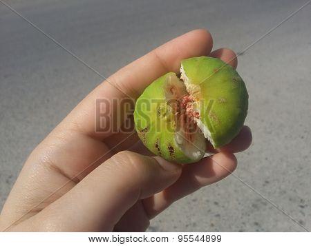Fresh fig on hand
