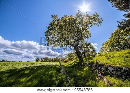 Scottish sunny day