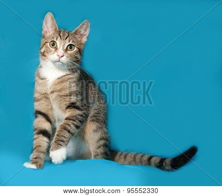 Tabby Kitten Sitting On Blue
