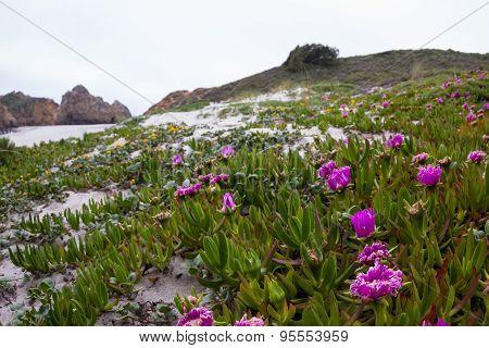 blooming beach