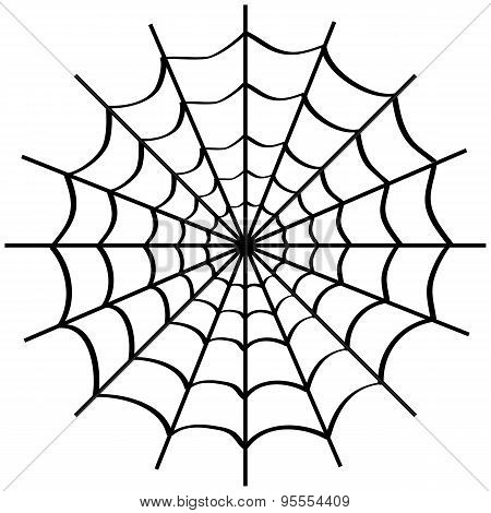 Spider Web On White.