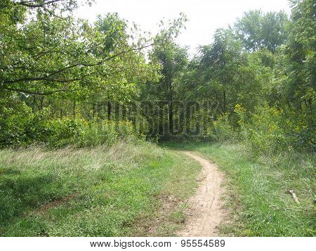 Narrow trail leading into the woods