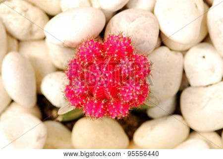 colorful cactus, close up image of rows of cute colorful miniature cactus