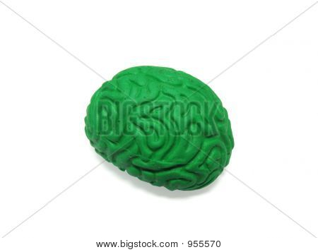 Green Brain Model On White Background