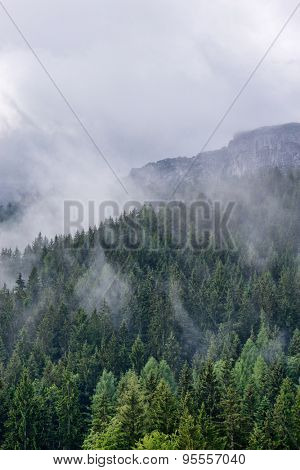 Scenic alpine landscape with coniferous evergreen forest and lush vegetation on the mountains under mist and clouds, at high altitude