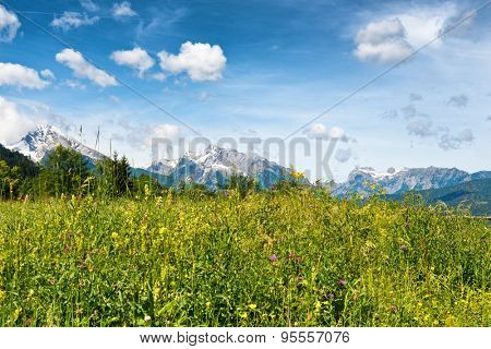 Close up low angle of overgrown grassy meadow with wild flowers, snow-capped mountain peaks in background beneath blue sky and white clouds